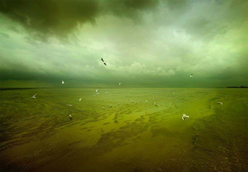 Markus Wendler: Wadden Sea - Markus Wendler set out on a day trip to Neuwerk along the Wadden Sea in Germany and came…
