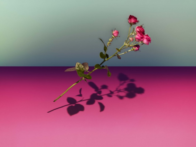 James Day : Personal Work : Falling Flowers -